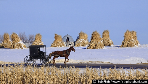 agricultural scene;agriculture;Amish;buggy;carriage;corn shocks;corn stalks;country;farm;fieldwork;harvest;horse;horse drawn carriage;road;WI;winter;Wisconsin;crop