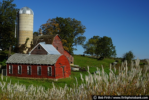 Barns;agriculture;country;farm;farm buildings;red barn;rural;summer trees;summer;grasses;silo;midwest farm;farmstead;farm field;Minnesota;MN