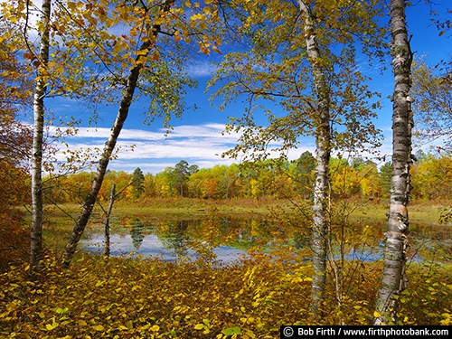 autumn;Itasca State Park;Great River Road;MN;Minnesota;fall color;fall;destination;woods;woodlands;up north;trees;reflection;quiet water;pond;northern Minnesota;Mississippi River Valley;birch trees;river birches