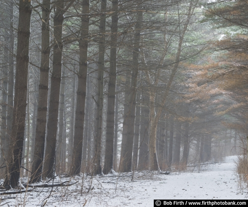 winter;trail;snow;road;pine trees;pathway;path;MN;Mississippi River Valley;Minnesota;Great Bluffs State Park
