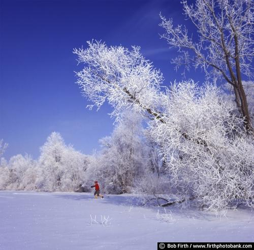 cross country skier;cross country skiing;winter;winter wonderland;frosty trees;snow covered trees;Excelsior;Minnesota;MN
