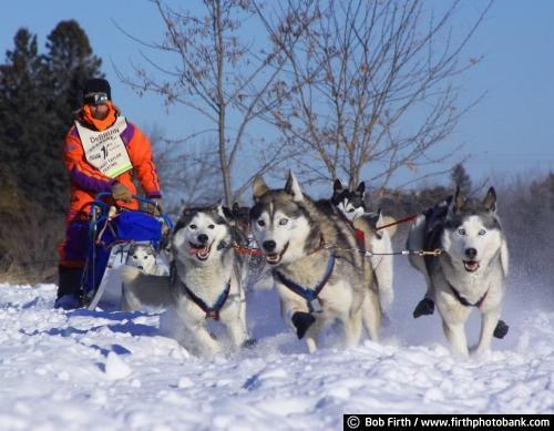 winter;snow;sled dogs;photo;North Shore;musher;Minnesota;malamutes;John Beargrease Sled Dog Race;huskies;frigid;dogs;dog sledding;competition;MN