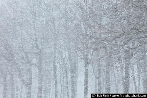 woods;woodland;winter;snow storm;snowy trees;blizzard;WI;Wisconsin;blowing snow